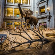 museum-of-natural-history-lobby-credit-flickr-user-m01229